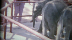 1963: Baby elephants in small zoo holding pens on display for wealthy humans. Stock Footage
