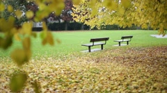 Empty park benches, Golden autumn, England, Europe Stock Footage