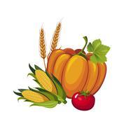 Harvest Pumpkin, Stalks and Tomato, Vector Stock Illustration