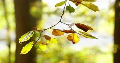 Autumn leaves close shot Stock Footage