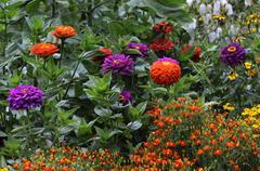 Beautiful multicolored flowerbed in garden Stock Photos