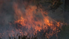Close view of forest fire and dark smoke Stock Footage