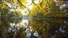 Fall foliage landing on water surface, sun reflections Stock Footage