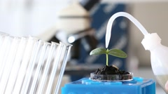 Experimenting With Flora In Laboratory.seedling in Laboratory. - stock footage