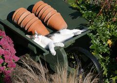 Cat napping Stock Photos