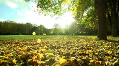 In autumn park leaves slowly fall to the ground slowmotion Stock Footage