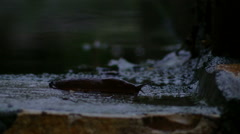 A slug moving along on a wet autumn day Stock Footage