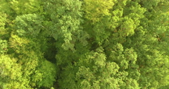 Lush forest aerial. Stock Footage