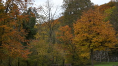Orange leaves trees in preserved park surrounded by forest. - stock footage