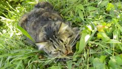 Cat playing with mouse on the ground Stock Footage