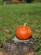Vibrant orange pumpkin sitting on grass - stock photo