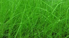 Green grass with water drops rotating (loop) Stock Footage