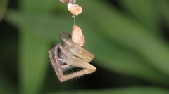 Spider molts night close-up Stock Footage