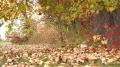Moving close to ground above ground covered with leaves Stock Footage