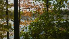 Foliage in New England, Red Tree with Golden Sun, swamp establishing Stock Footage