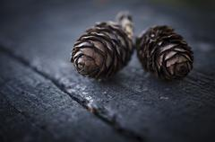 Two fir cones Stock Photos