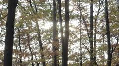 Sun bleeds through the autumn ravaged trees Stock Footage