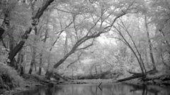 Enchanted Stream Background Stock Footage