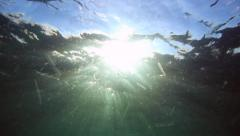 Underwater view of sunlight rays shining into ocean filled with jellyfish Stock Footage