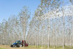 Poplar grove and tractor Stock Photos
