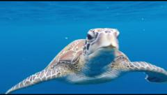 HD footage underwater of Sea Turtle swimming in blue water Stock Footage