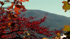Red autumn leaves mountain vista Stock Footage