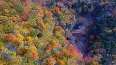 Over the woods - stock footage