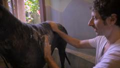 Slow motion of a man washing his Great Dane while kneeling in a large bathtub Stock Footage