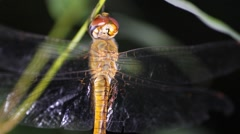 Dragonfly night Stock Footage