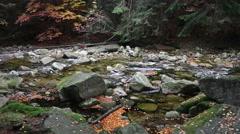 Autumn Forest Stream Stock Footage