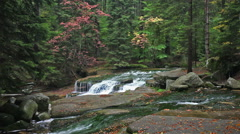 Stock Video Footage of Stream with Water Cascade in Autumn Forest
