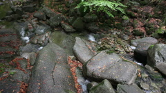 Small Mountain Creek - stock footage