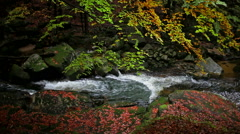 Stream in Autumn Forest - stock footage