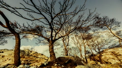 Burned pine trees on top of rocky mountain knoll,barren ground,timelapse,zoom in Stock Footage