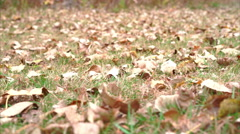 Low point of view camera moving above grass covered in fallen leaves Stock Footage