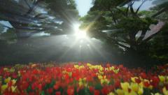 Magic forest with colorful tulips, sun shinning through trees Stock Footage