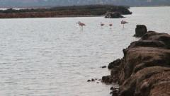 Flamingos in salt lake, southern Spain Stock Footage
