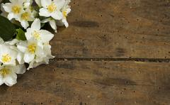 Flower in wooden background Stock Photos