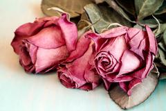 Three dried roses on old wooden background - stock photo
