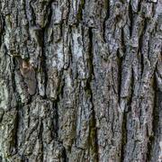 Wallnut texture Stock Photos