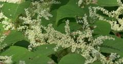Bees on flowers, last honey on the Autumn Stock Footage