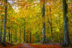 Trees with warm colors in the fall - stock photo