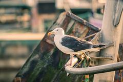 Seagull on a boat Stock Photos