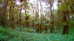 Tropical Plants and Trees in a Forested Wilderness Area, with Sound Stock Footage