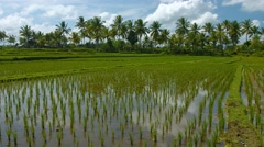 Farm with Lowland Rice Paddies in Southeast Asia. 4k video Stock Footage