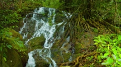 Natural Waterfall Flows around Exposed Tree Roots, with Sound. 4k video - stock footage