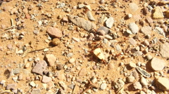Fire ants on ground dirt desert Stock Footage