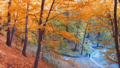 Autumn park at sunny day Stock Footage