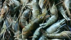 Prawns Fish close-up - stock footage