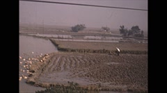 Vintage 16mm film, 1965, Japan, rice paddies Stock Footage